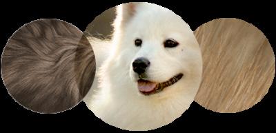 2-3-4-allergies-aux-chiens