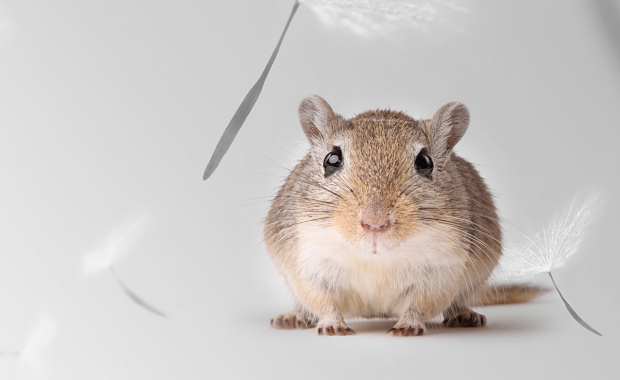 City Asthma and Respiratory Allergies: Are Mice Guilty?