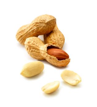 Vers une immunothérapie orale efficace pour l'arachide?