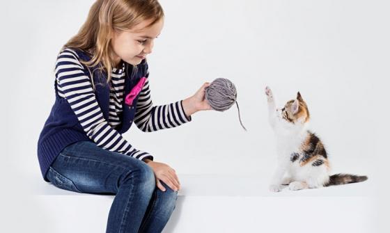 Allergie au chat: se débarrasser du chat … ou de ce conseil?